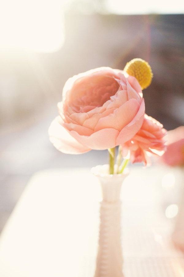 elegant blush pink flower