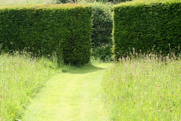 Cut grass path through long grass and wildflowers to gap in clipped taxus hedge....