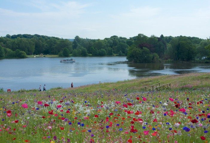 From Five gardens by Capability Brown - The English Garden Magazine - Wild Flowe...