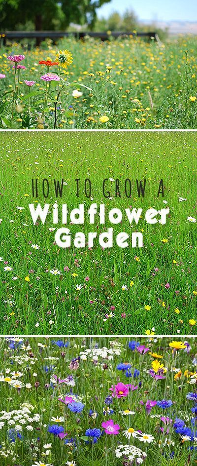 How to Grow a Wildflower Garden • Here's how to get started and how to keep ...