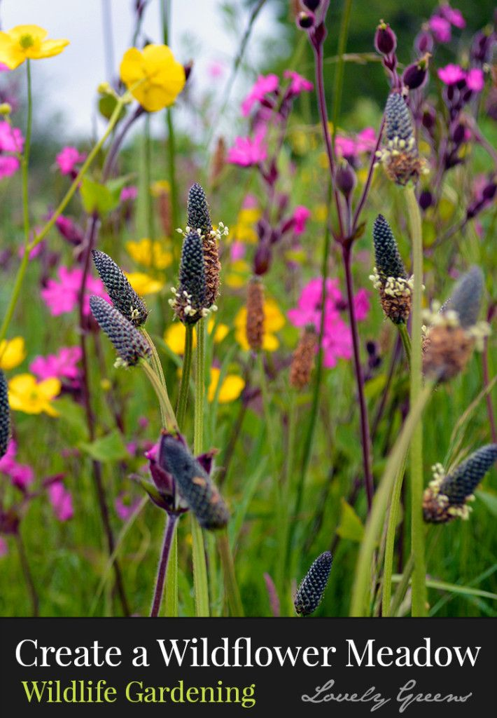 How to create a wildflower meadow - a low-maintenance and beautiful haven for wi...