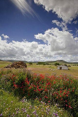 Landscape near Castrojeriz, Camino Frances, Way of St. James, Camino de Santiago...