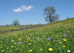 meadows - Bing Images