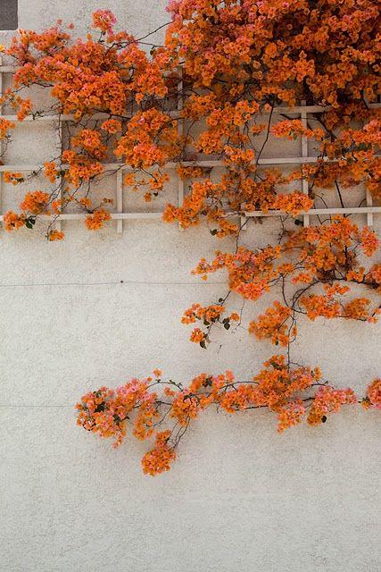 Orange. #orange #flowers #wall