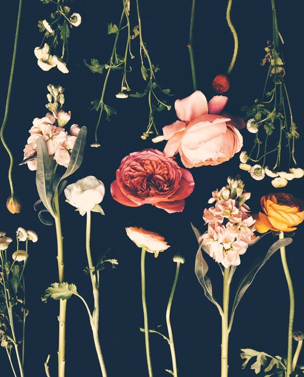 Our friends, the flora. | Justina Blakeney