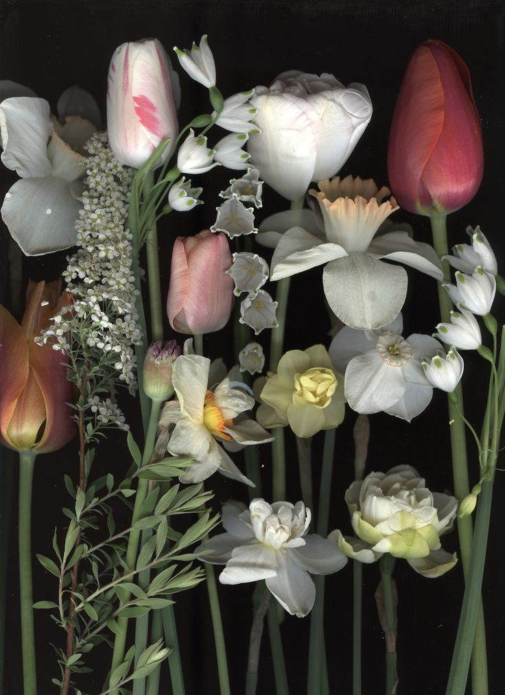 We're finding floral inspiration in these scanned daffodils and tulips by Crai...