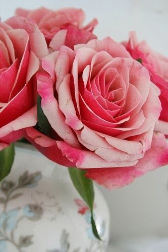 Beautiful Rose Flowers