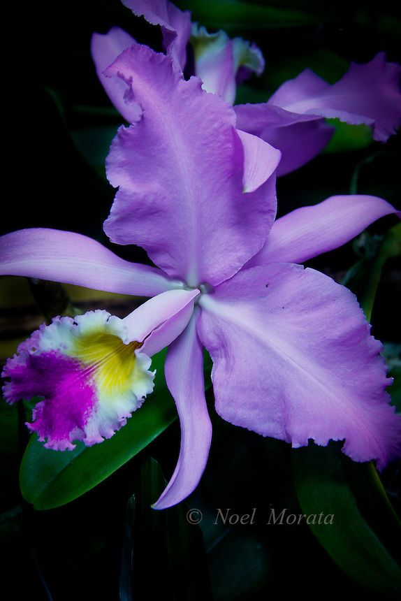 Exotic orchid collections featuring new hybrids, rare specimens