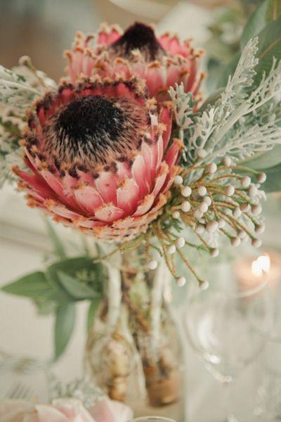 Pink mink protea...Love it!