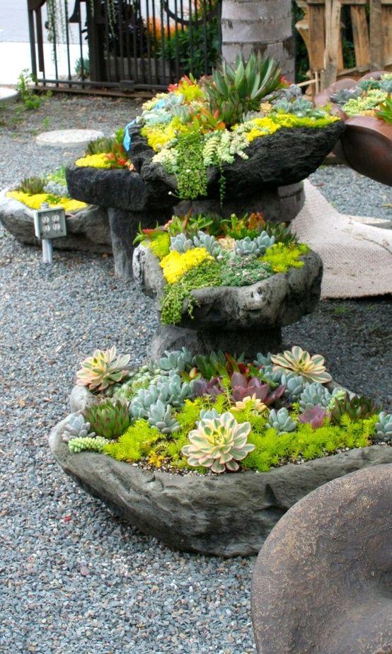 Flowers And Garden Ideas : Succulent Rock ...