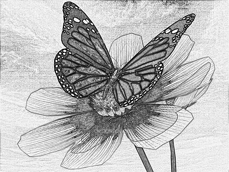 Flowers Drawings Inspiration : Amazing Pencil Drawings ...