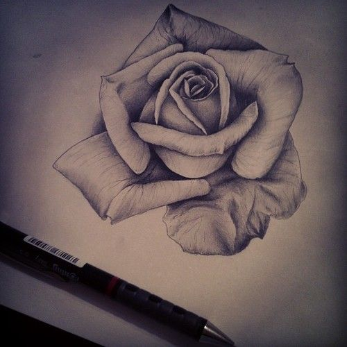 Flowers Drawings Inspiration Group Of Roses Pencil Drawing Tumblr
