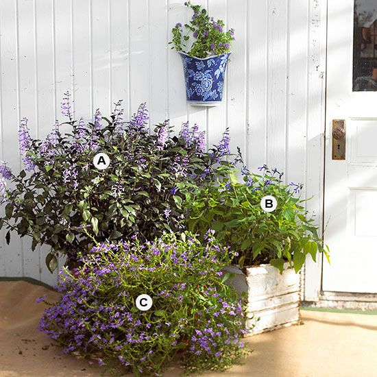 This grouping of different kinds of containers, yet planted in the same color pa...