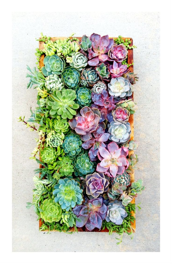 Weddings Flower Arrangements Succulents Centerpieces Anyone Flowers Tn Leading Flowers Magazine Daily Beautiful Flowers For All Occasions