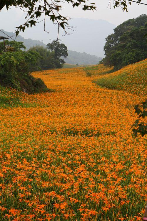 ✯ Wildflowers