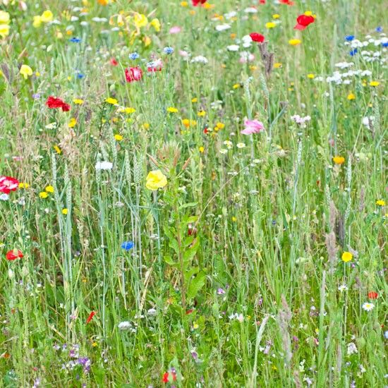 Devote a corner of the garden to wildflowers and help to save our fast-disappear...