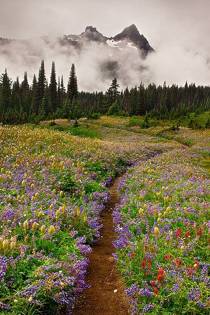 Mt. Rainier National Park wildflowers, Washington State