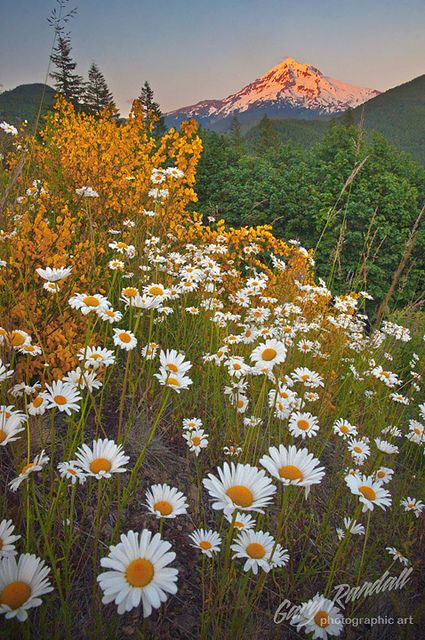 Springtime on Lolo Pass, Mount Hood National Forest, Oregon