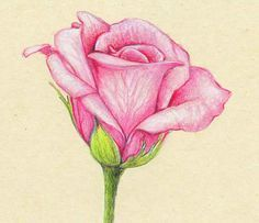 pencil drawings of flowers and butterflies with colours - Google Search