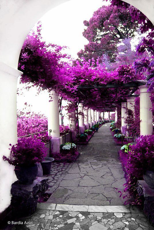 Pink Garden by Bardia Azizi