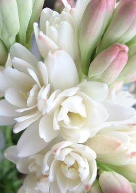 tuberose - favorite scent