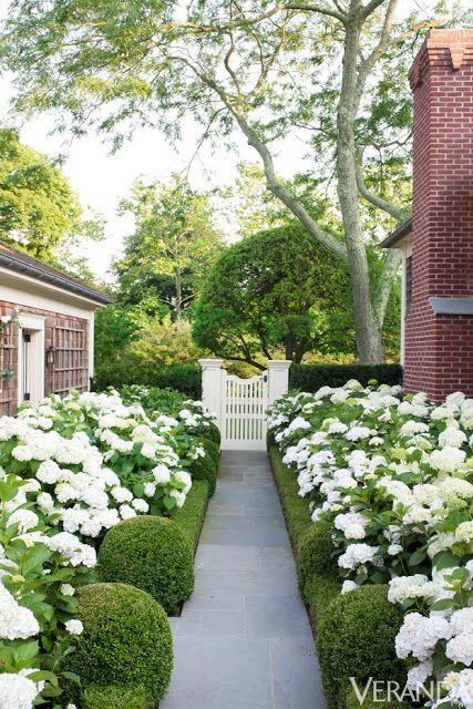 hedges and hydrangeas