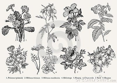 Botany. Set vintage realistic isolated flowers. Nature. Drawing engraving. Vecto...