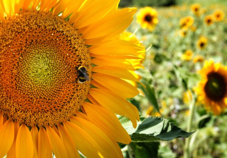 How to Attract Bees to Pollinate Your Garden   #gardening #homemaintenance #home...