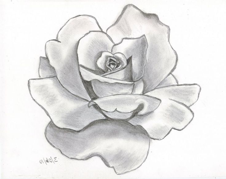 Pencil Sketch Drawing Of Flowers - See more about Pencil Sketch Drawing Of Flowe...