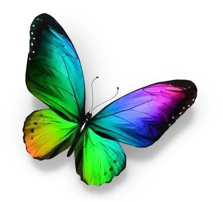 Picture of Color butterfly , isolated on white stock photo, images and stock pho...