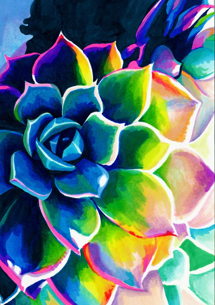 Flowers Drawings Inspiration Supplication Succulent Colorful