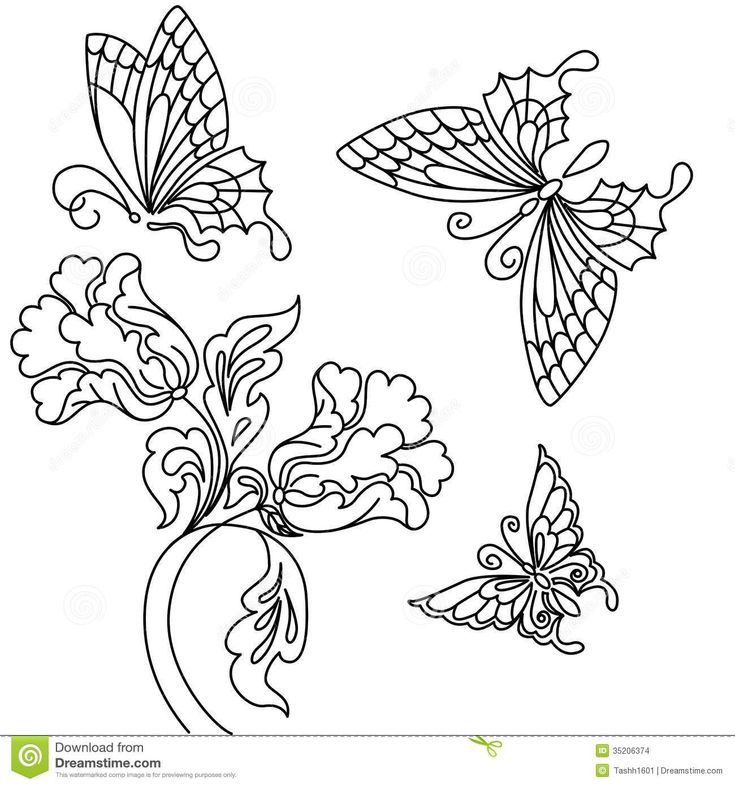 pencil drawings of flowers and vines - Google Search