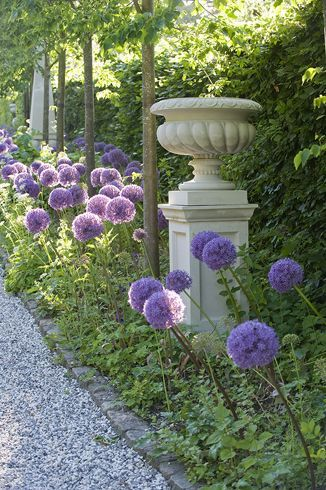 Allium - I just think they are fun.