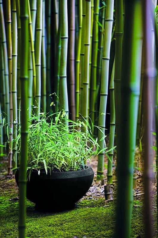 Flowers And Garden Ideas Bamboo Flowers Tn Leading Flowers