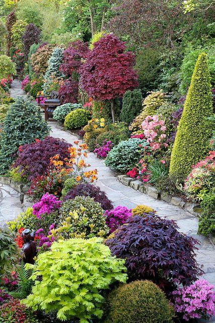 Beautiful combination of shrubs, trees & flowers