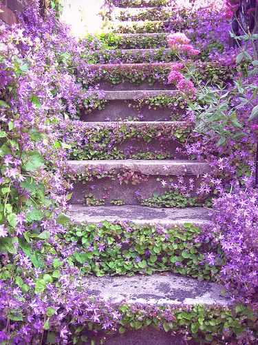 Lilac stairway: beautiful