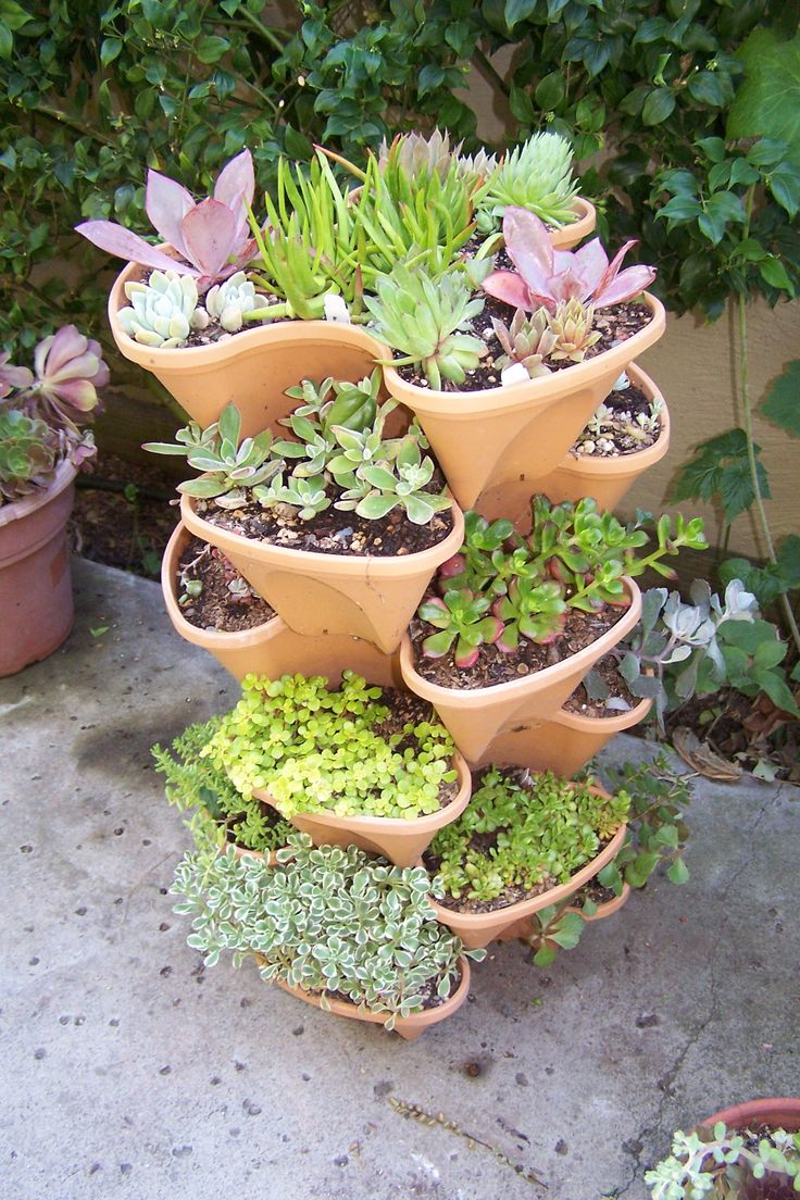 This planter is a fun way to collect a lot of succulent varieties in a small spa...