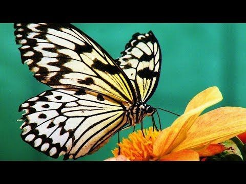 Acrylic Painting Art Tutorials, full length live shows, fun and easy art lessons...