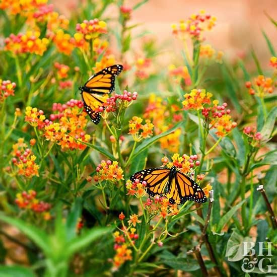 There are many reasons why you should welcome birds and butterflies into your ga...