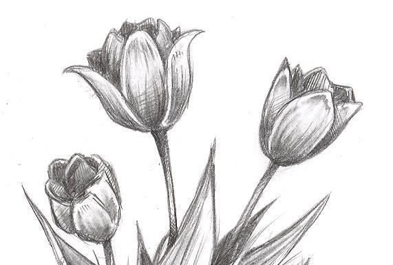 Easy Flowers To Draw Archives Page 264 Of 714 Flowers Tn Leading Flowers Magazine Daily Beautiful Flowers For All Occasions