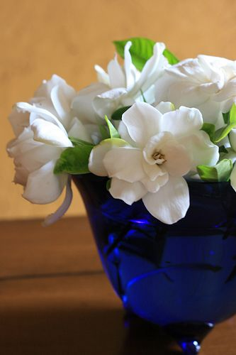 gardenias in blue bowl. I can almost smell the sweet, romantic fragrance.