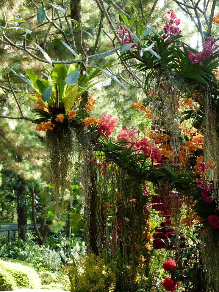 Orchid Botanical Garden, Singapore                                              ...