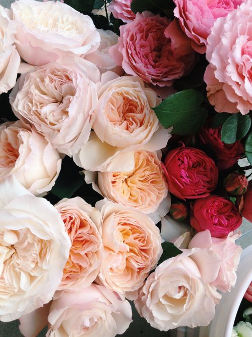 David Austin Roses - A great addition to bouquets and come in a range of differe...
