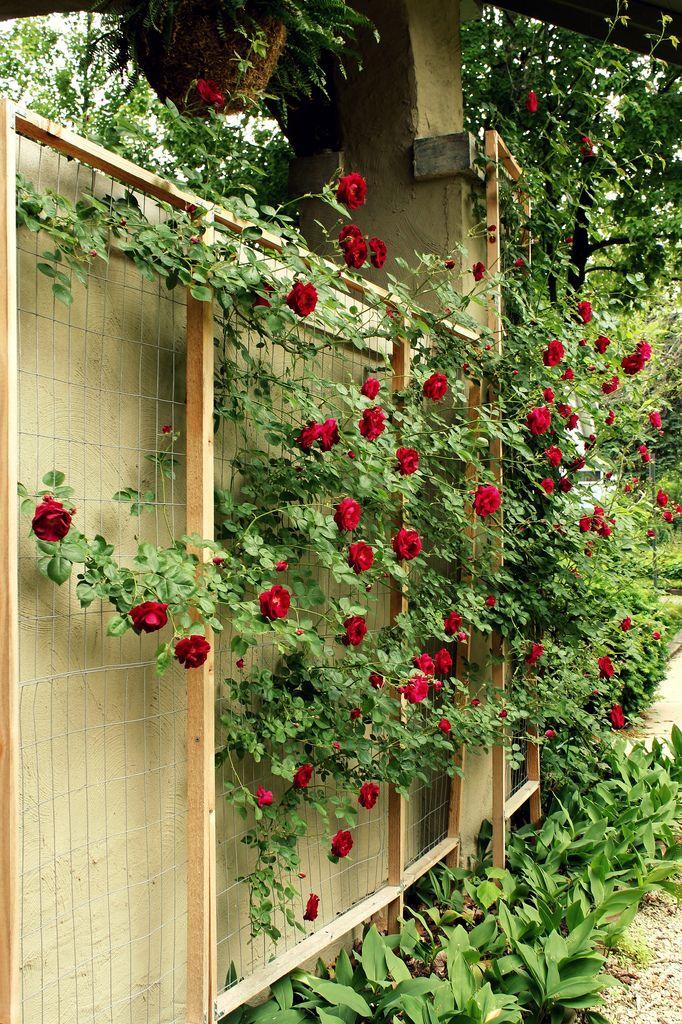 Flowers Drawings Inspiration My Beloved Grandma Loved Roses