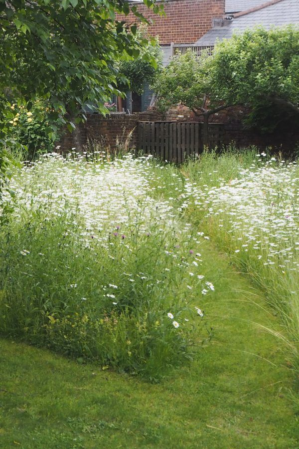 How to create a wildflower meadow in a small garden or backyard
