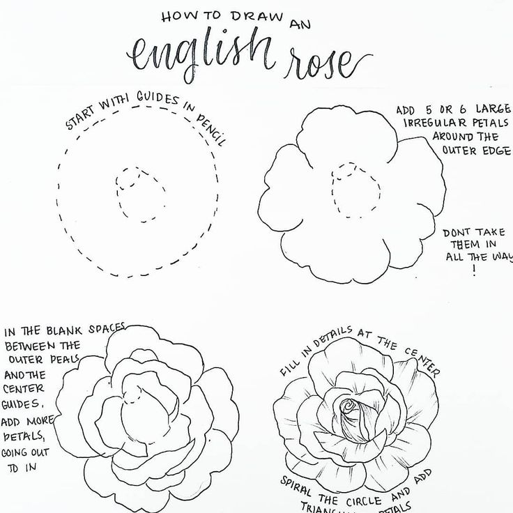 Flowers Drawings 50 Amazing Doodle How To S For Your Bullet Journal My Inner Creative Flowers Tn Leading Flowers Magazine Daily Beautiful Flowers For All Occasions