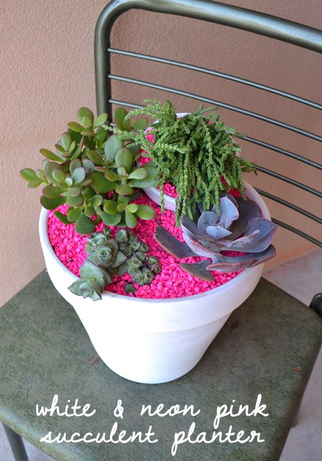 White and Neon Pink Succulent Planter
