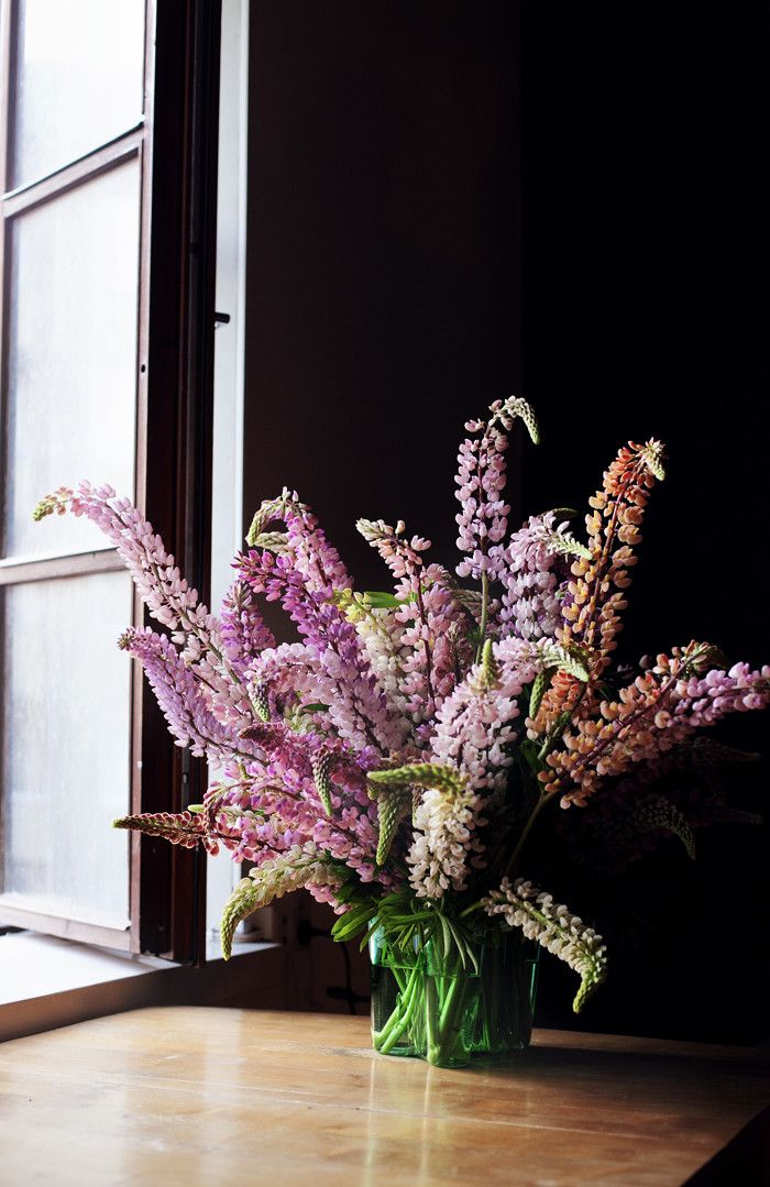 Summer traditions: pink lupins.