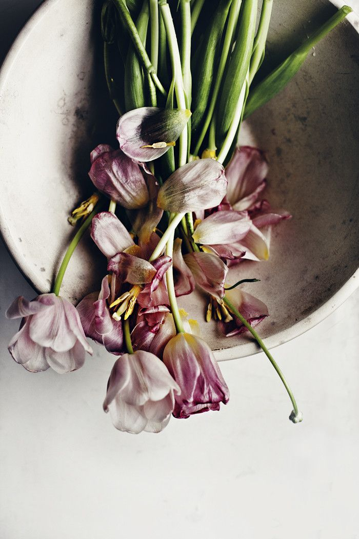 Takes from the flower diary: faded tulips - Suvi sur le vif   Lily.fi