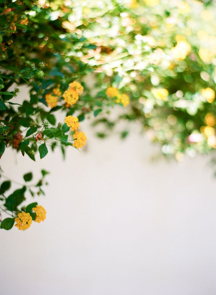 Yellow Flowers Mykonos